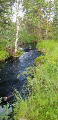 En bäck i skogen där vi plockade hjortron